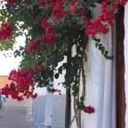 La puerta y sus flores
