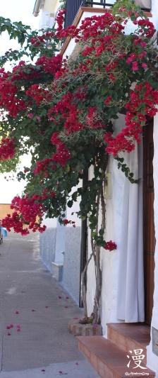 Las flores de la puerta