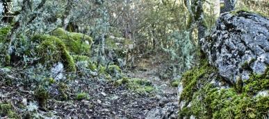 Senda en la Laguna del Tobar, Cuenca