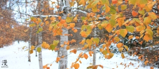 Y sus últimas hojas