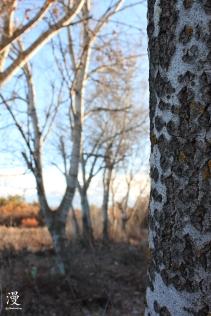 Los árboles se preparan para el invierno... ëste ya ha llegado!!!
