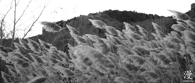Esparciendo las semillas de las cañas.