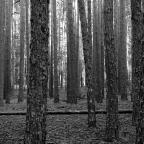 Tesoros en el bosque
