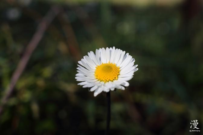 Flor1.JPG