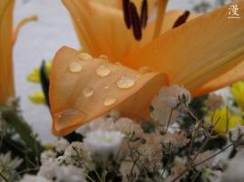 Llueve sobre las flores