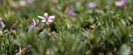 Las flores diminutas