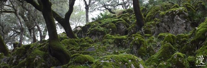 Musgo y piedra