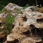 Como una roca…