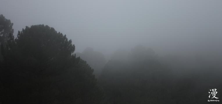 La niebla en la Sierra de Cádiz