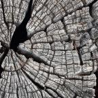 Viejo tronco…