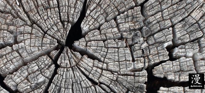 Un viejo tronco
