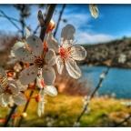 Como la Primavera