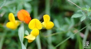 Flores diminutas